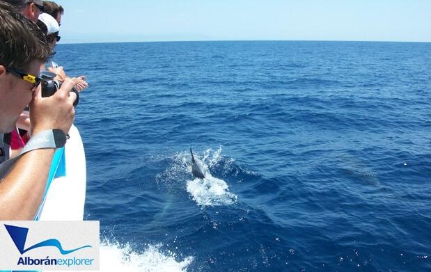 Paseo por el mar y ¡conoce a los delfines!