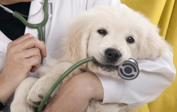 Test de Leishmania o Filariosis y vacunas caninas