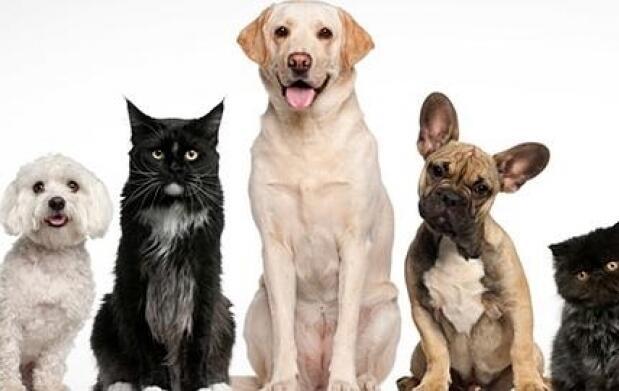 Limpieza bucal o esterilización para perro o gato