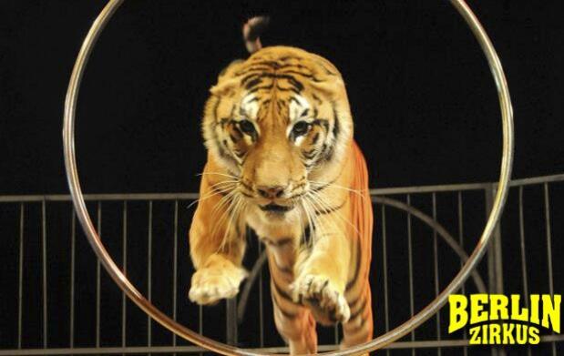 Últimas entradas para el Circo Berlín