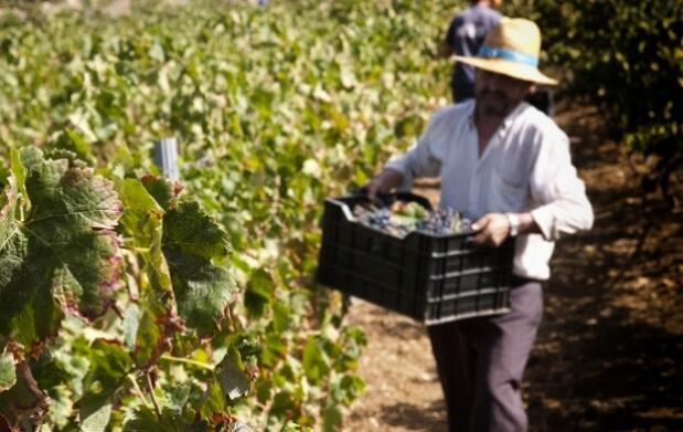 Visita a la bodega Pérez Hidalgo con cata de 3 vinos + Menú en Restaurante Los Caballos