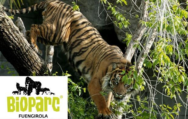 Bioparc Fuengirola al mejor precio