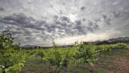 Visita a la bodega Pérez Hidalgo, cata de 3 vinos