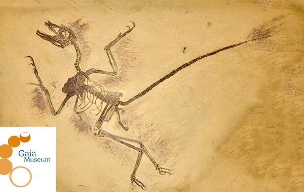 Acércate a los fósiles con Gaia Museum