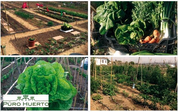 ¿Dispuesto a cultivar tu propio huerto?