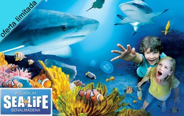 Toalla Gormiti + DVD + entradas Sea Life