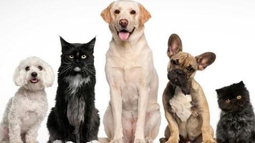 Oferta en limpieza bucal, sesión de peluquería o esterilización para perro o gato en Canitas Málaga