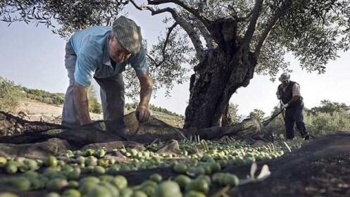Aceite de Oliva Virgen Extra PREMIUM Granadino con envío gratuito